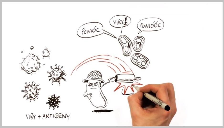 Video: Jak funguje naše imunita?